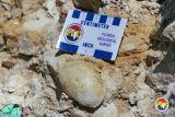 Crab in Ocala Limestone.jpg