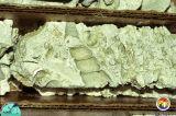 Arcadia Fm Sunniland core Collier Co.jpg