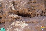 Dolime pit Eocene 2.jpg