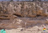 Dolime pit Eocene.jpg