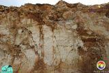 Grubbs Pit-Eocene Ocala karst.JPG