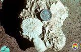 ocala_limestone