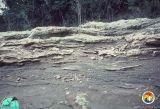 Outcrop 1981 Suwannee Rv C.jpg