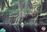 Suwannee River Exposure 3.jpg