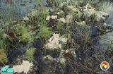 Everglades Microkarst.jpg