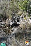 Pine rocklands karst.jpg