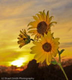 Flowers and Sunset-9626