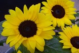 140 sunflowers 2.jpg
