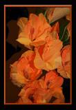 orange glads.Photoshop smudge
