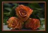 three orange roses.smudged in Photoshop