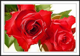 Red roses Photoshop smudge