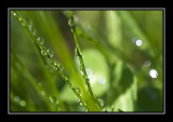 Raindrops and Sunlight on grass.......