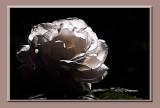 moody rose....