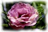 pretty pink flower...