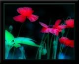 Orton effects on flowers,butterflies etc!!!