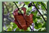 crisp leaves....