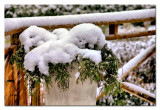 heavy snow on the tree in a planter...
