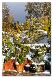 heavy snow and wind broke the stems of the sunflowers...so i have put them in a pot so the birds can eat the seeds...