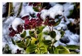 snow on seedam...