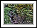 the little stream...