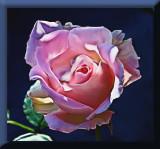 smudged rose...