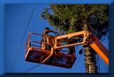 dismantling the Christmas tree...