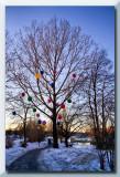the balloon tree...