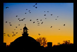 birds going to roost...