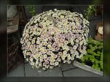 5-ball-of-flowers.jpg