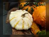 6-gourds.jpg
