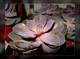 33-succulent.jpg