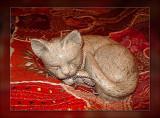 42-cat-on-the-mat.jpg