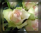 62-fine-roses.jpg
