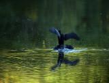 Magic morning on Porter Pond