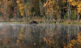 Autumn on Beaver Pond