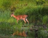 On Beaver pond
