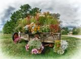 Autumn in Ossipee NH