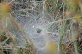 Home of Funnel Web Spider