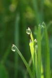 Land of Drops