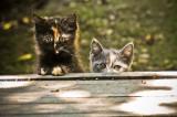 scaredy cats ;)