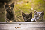 three peeking