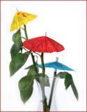Feb. 23 - umbrellas