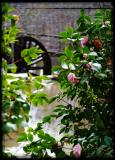 camellias and the wheel