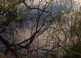Sickla sjö1.jpg