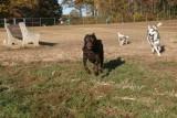 Julie, Smokey & Nina (IMG_7353ar.jpg)