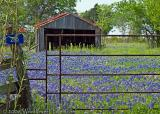 Bluebonnet Garage