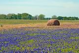 Hay and Bluebonnets - Calhoun Road