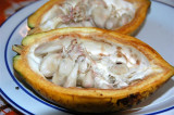 Cocoa (seeds)