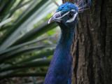Bronx Zoo 8-19-03 0124.JPG