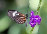 Buttefly_04.jpg